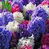 Ο Άγιος της νεότητας κι των λουλουδιών...