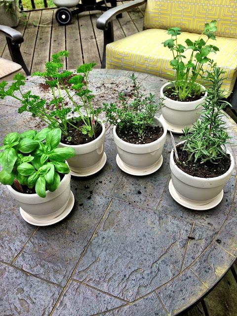 Twine Interiors, pots, garden
