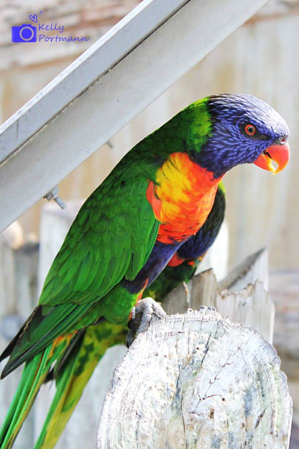 San Antonio Photographer, San Antonio Zoo, Pretty Bird, Zoo Coupons