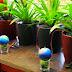 Energia elétrica gerada por plantas carrega até bateria de smartphone