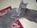 My Sweet Cats
