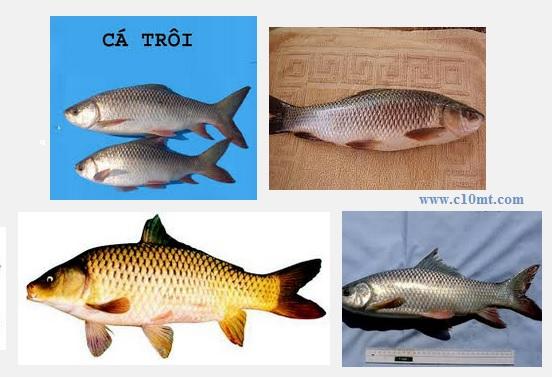 Có phải đầu cá trôi xương cá mè trị đau xương khớp