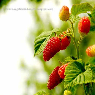 benefits_of_eating_raspberry_fruits-vegetables-benefits.blogspot.com(benefits_of_eating_raspberry_12)