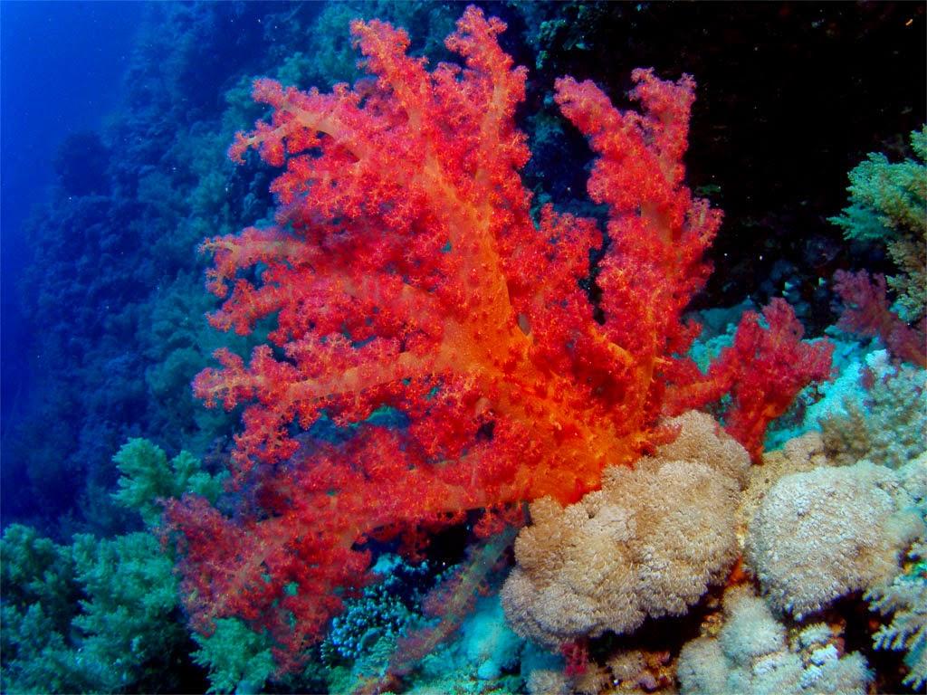 Corals (stones): magical properties, value 78