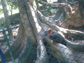 lonely bird in Zoobic Safari