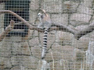 Hong Kong zoological park