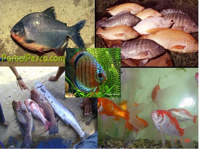 piscicultura especies para cultivar