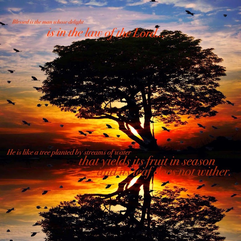 He is like a tree planted by streams of water...
