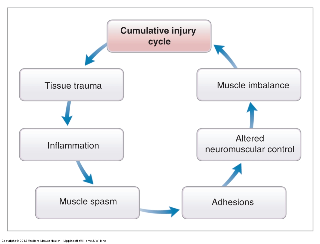 Image result for cumulative injury cycle nasm