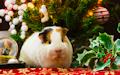 Postal navideña con un lindo hamster, esferas y regalos.