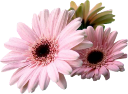 flor+gif+(2).png