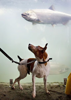 Peixe saindo do aquário e cachorro surpreso