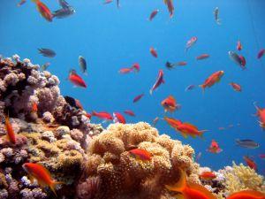 imagem de refice e peixinhos coloridos