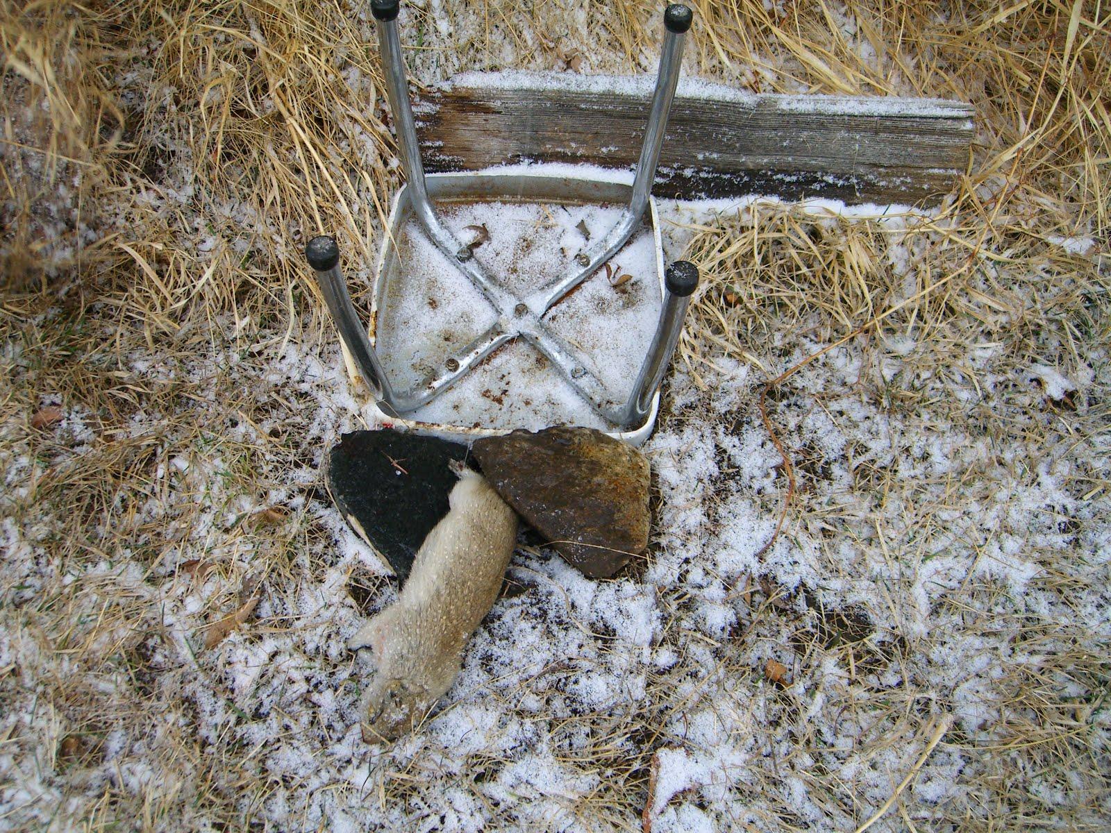ground squirrel traps images