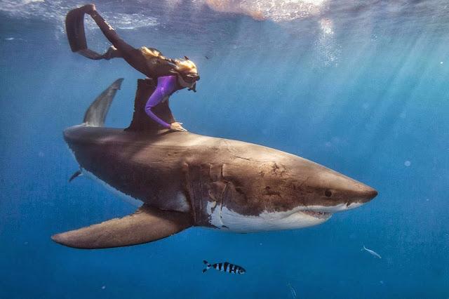 женщина аквалангист и акула