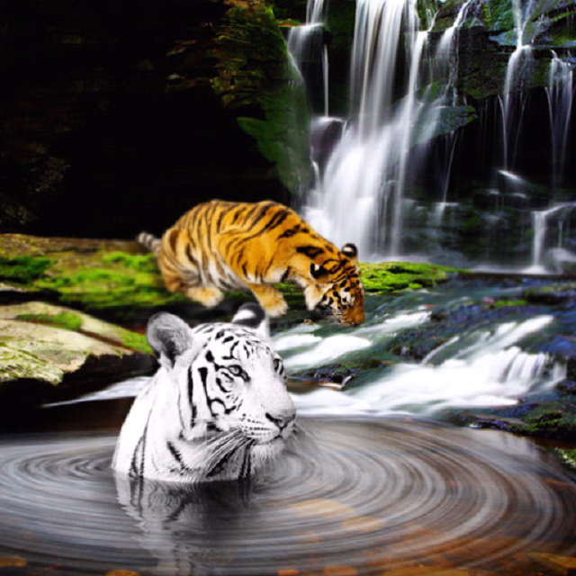 wallpaper tiger 3d