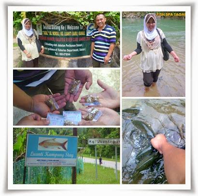 SABAH : @ TAGAL FISH KG LUANTI