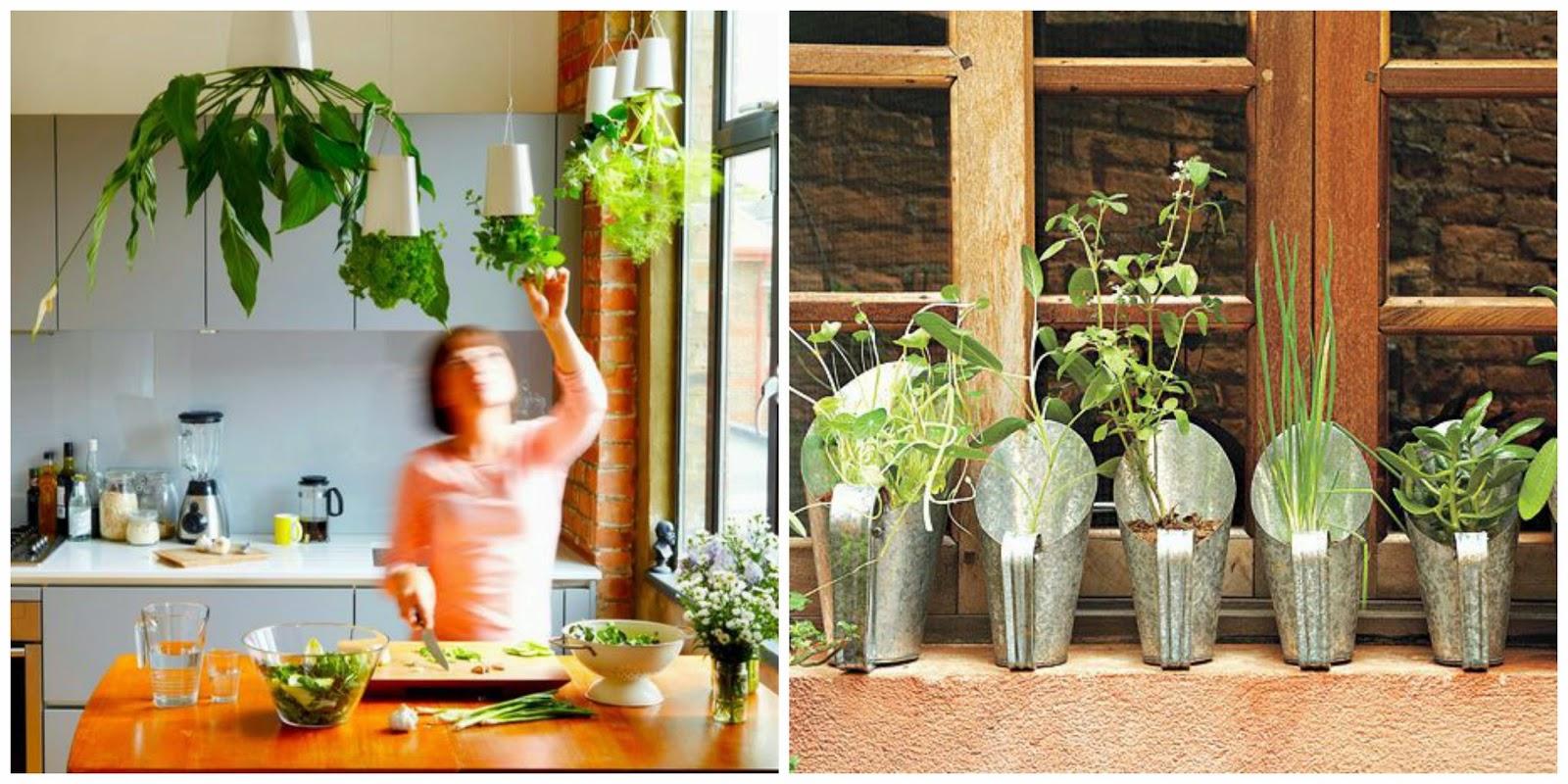 cozinha com horta