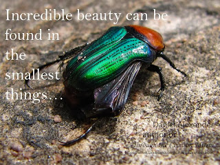 Incredible beauty can be found in the smallest things...