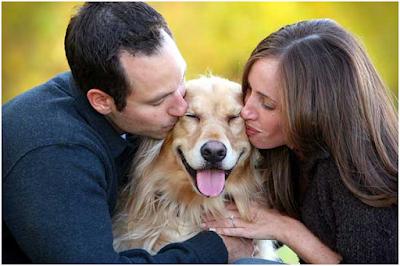 Tình yêu dành cho cún