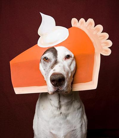 Pumpkin Pie Halloween Costume