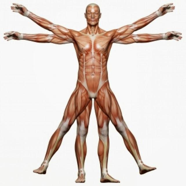http://www.educaplay.com/es/recursoseducativos/12958/html5/musculos_del_cuerpo_humano.htm#!
