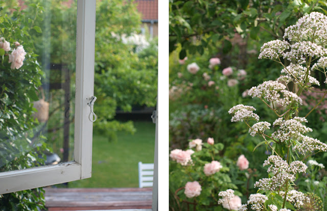 Roser og stauder i den vilde og romantiske have