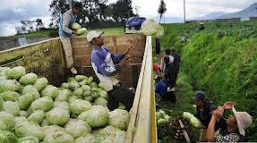 Proses pengangkutan hasil pertanian sayur mayur dari desa ke kota bentuk interaksi yang terjadi antara desa dan kota.