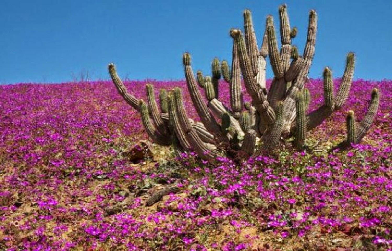 Рослини в пустелі фото 19 фотография