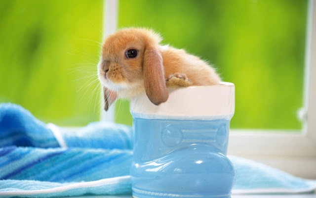HD konijnen achtergrond