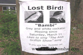 12 Funniest Lost & Found Pet Signs