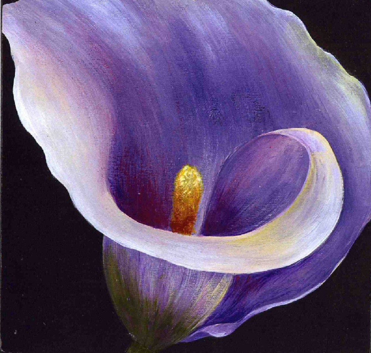 Purple calla lily flower izmirmasajfo Image collections