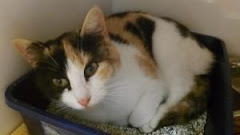 11/10/12 Mercer County Animal Shelter, Princeton West Virginia