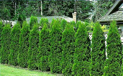 100 natural hardwood mulch custom garden designs - Green fencing ideas ...