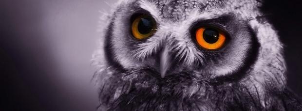 guzel kus facebook kapak resimleri+%252817%2529 35 En Güzel Facebook Kuş Kapak Resimleri indir