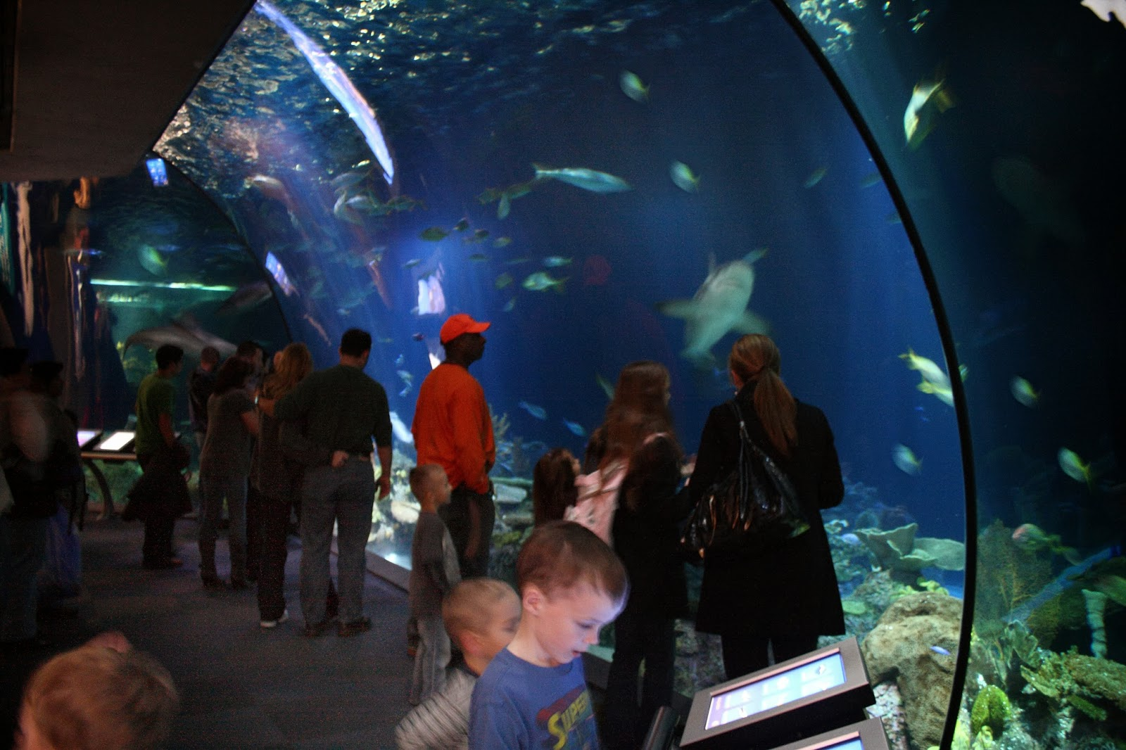 gallery, photography, place, shedd aquarium,