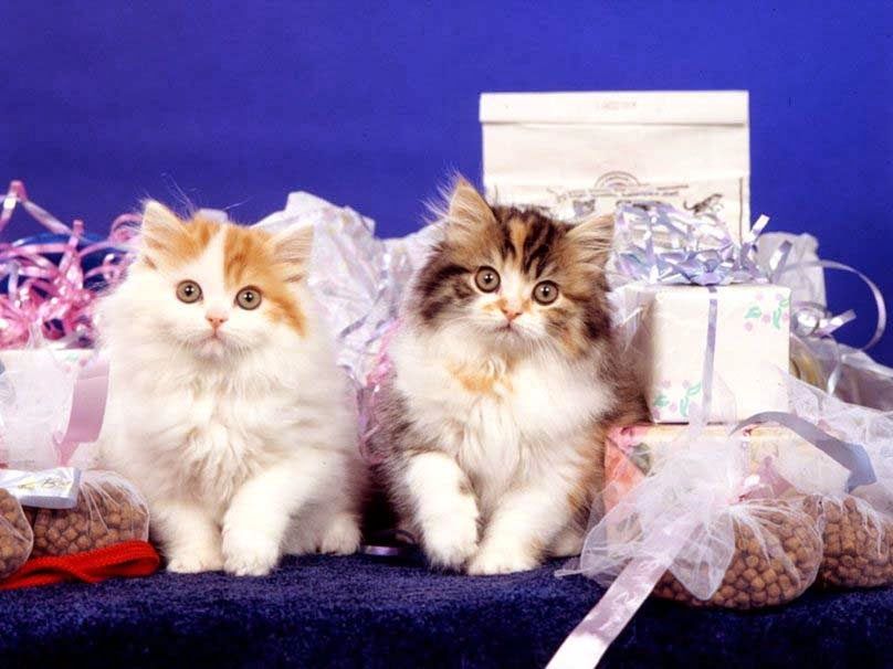 sweet-cats-in-holidays