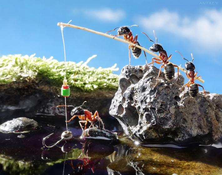 Imagem de Formigas  pescando