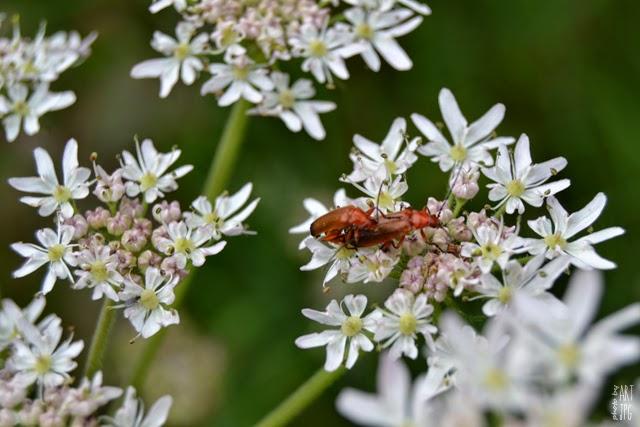 owady, łąka