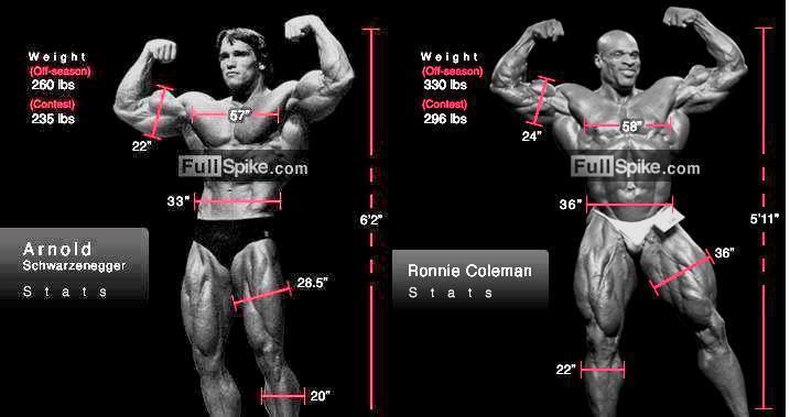 bodybuilding schedules  ronnie coleman vs arnold