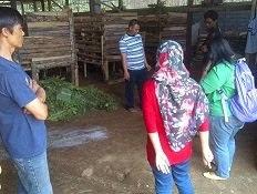 Analisa Penyakit  di Peternakan Kambing-Domba tgl 28 September 2013