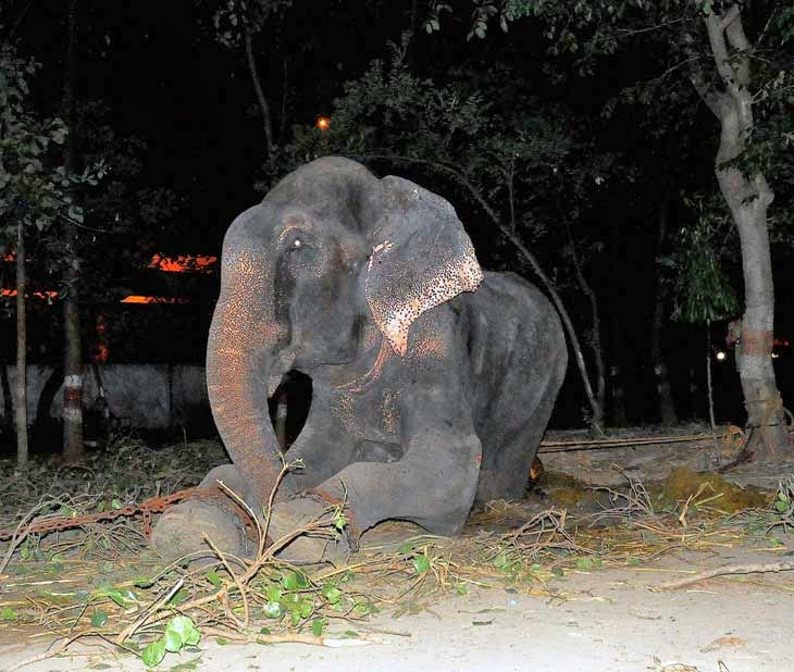 Elephant Cries Tears of Joy After Being Rescued From 50 Years of Suffering and Abuse