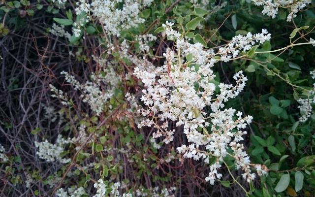 fotos-bonitas-cielo-flores