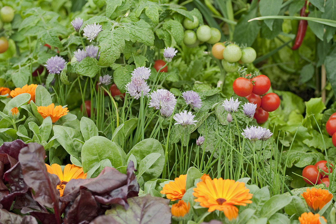 most beautiful vegetable gardens the hippest