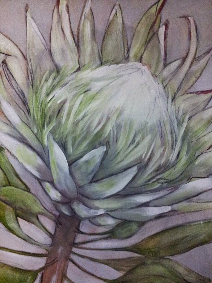 King Protea Drawing White King Protea Painting