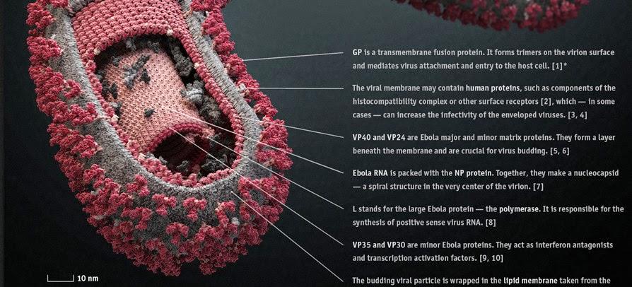 WHO declares Ebola epidemic an...