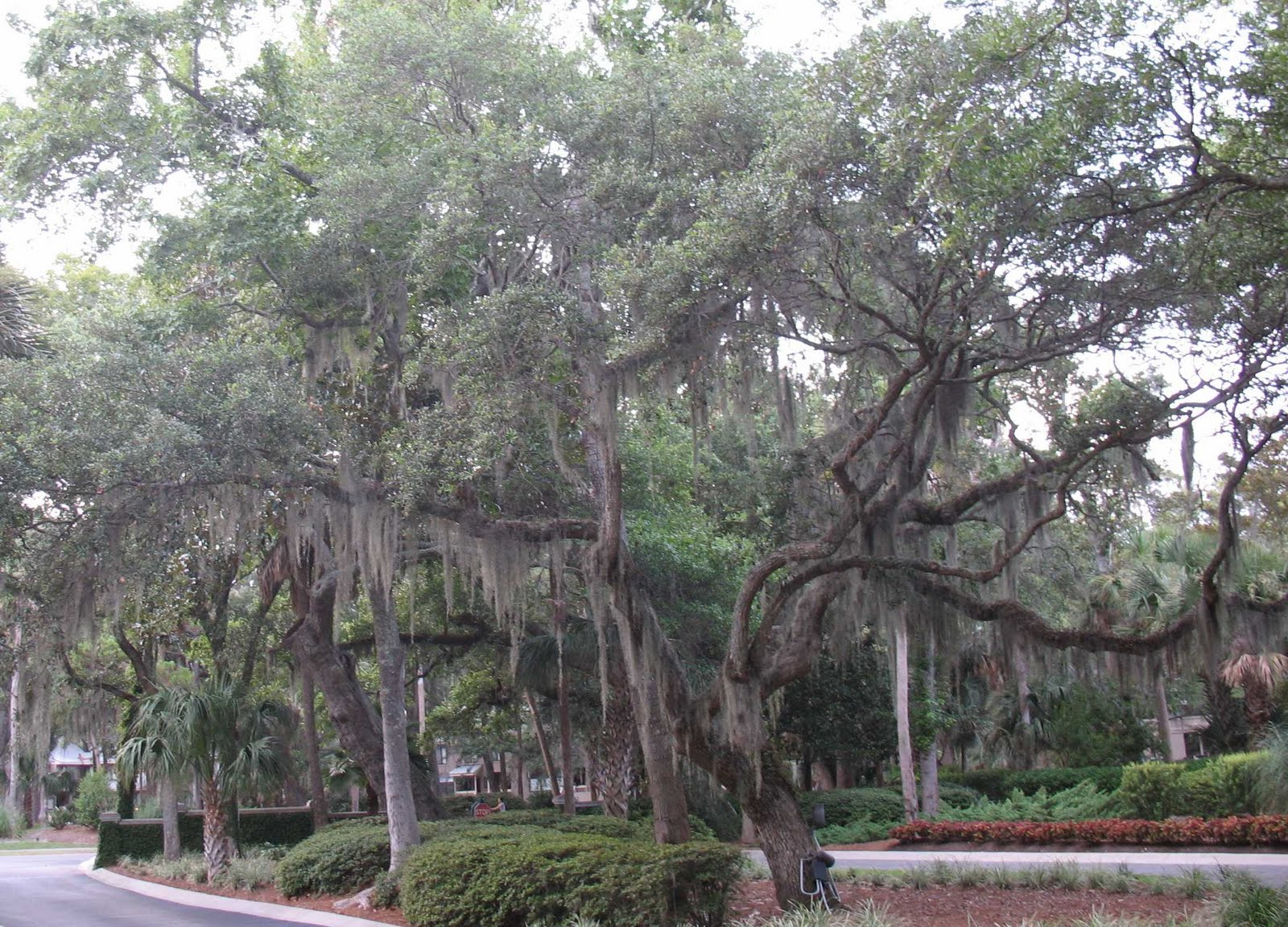 Using Georgia Native Plants Coastal Plains Plants Perfectly Placed