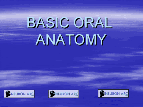 BASIC ORAL ANATOMY PPT