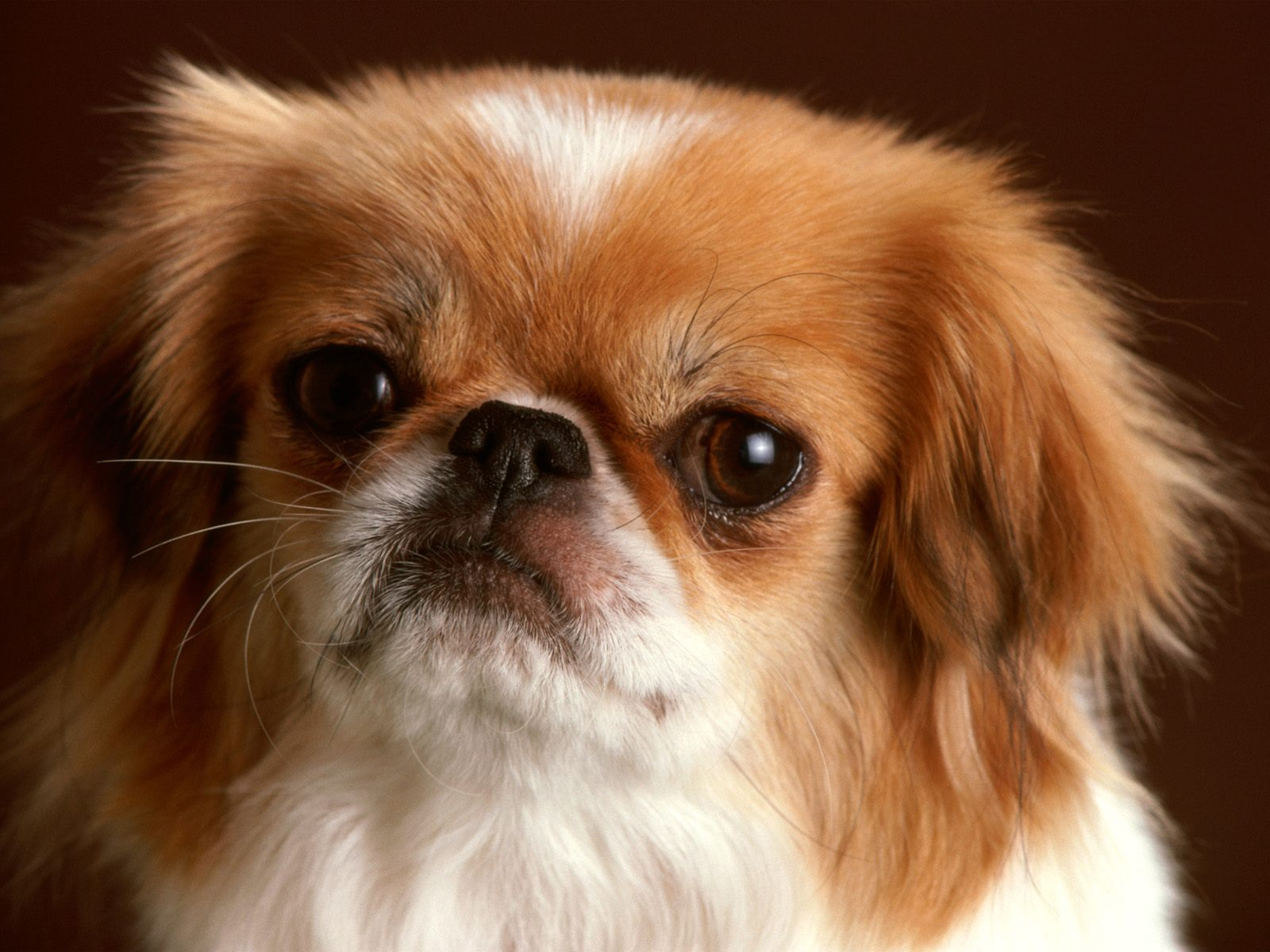 images of baby dogs - photo #25