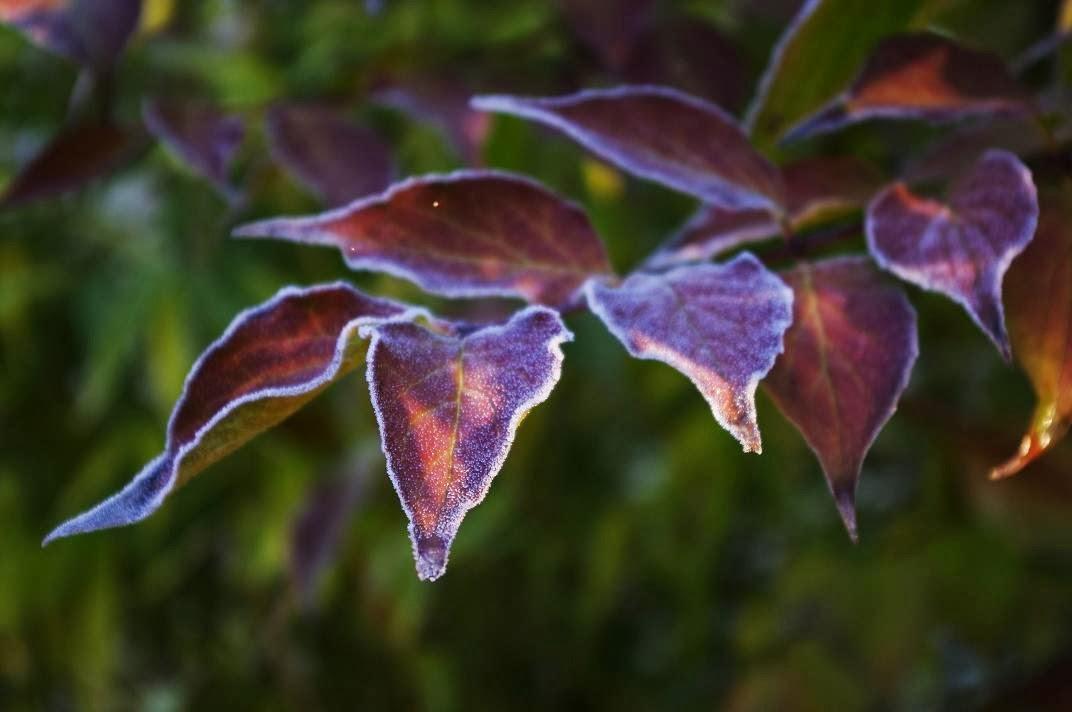 Le jardin des couronnes de la couleur au jardin for Au jardin des couleurs